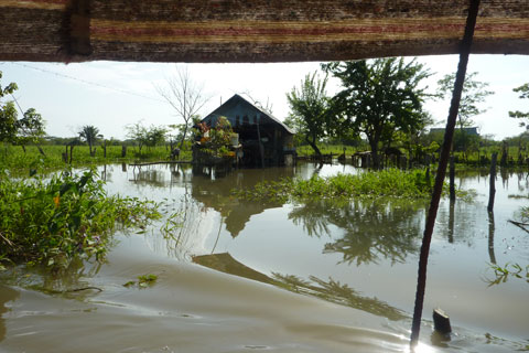 Mompox Swamps