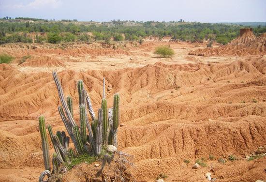 Cactus in the Tatacoa Desert near Neiva